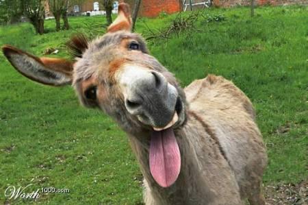 el-burro-y-al-familia1